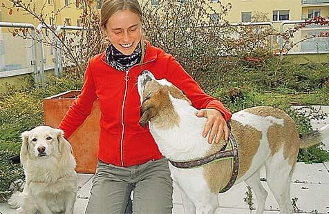 Schmerzensgeld für zwei Hunde nach üblem Autounfall (Bild: Vier Pfoten)