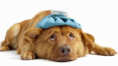 Wachsamkeit schützt Haustiere vor Erkrankungen (Bild: © 2011 Photos.com, a division of Getty Images)