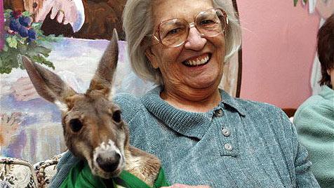 Polsterstreit mit Känguru: Irwin liebt sein Luxusleben