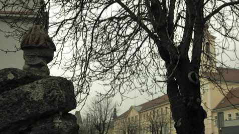 Stück NS-Geschichte in Film dokumentiert (Bild: Gerhard Pazderka)
