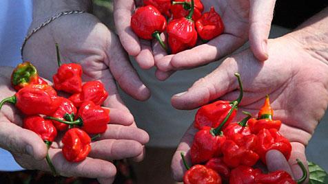 Abwasser von Wurmfarm schafft schärfsten Chili (Bild: www.thechillifactory.com)