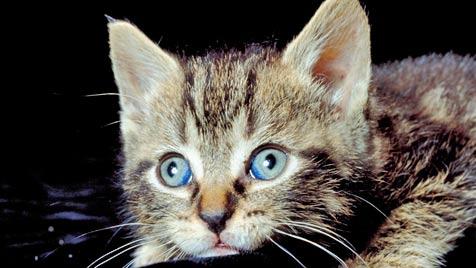 Katzen sind Umsatzbringer Nummer eins (Bild: Photos.com/Getty Images)