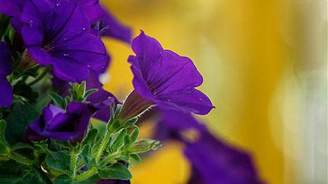 Blütenparadies soll zu Industriegebiet werden (Bild: AP)