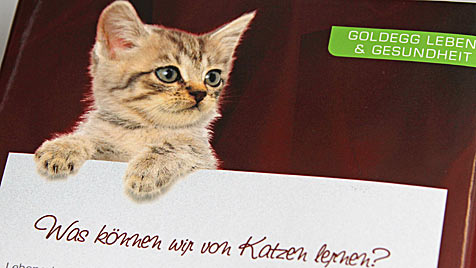 Buchautorin zeigt, was wir von Katzen alles lernen können (Bild: Peter Tomschi)