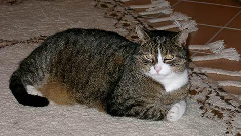 Brutaler Tierquäler schoss bereits auf die dritte Katze (Bild: Privat)