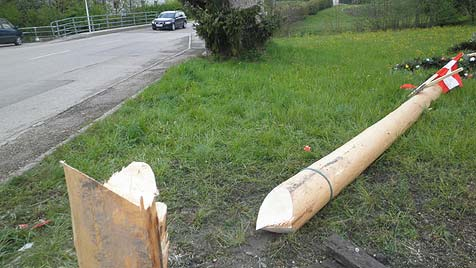 Maibaum im Bezirk Vöcklabruck mit Säge bearbeitet (Bild: FF Bruckmühl)