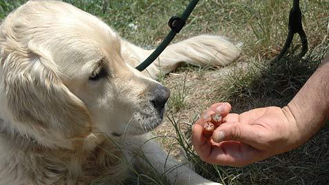 Gemeine Hundevergifter sind kaum zu fassen (Bild: Johann Haginger)