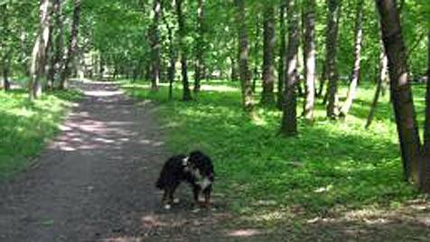 Der krone.at-Hundezonentest: Prater, Wien 2 (Bild: Denise Zöhrer)