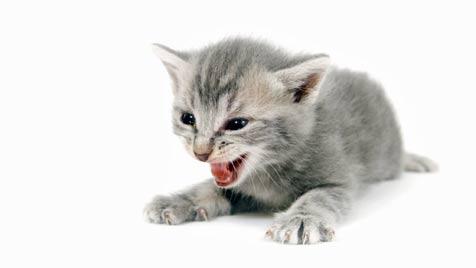 """""""Herbstkatzen"""" stehen """"Maikatzen"""" in nichts nach (Bild: Photos.com/Getty Images)"""