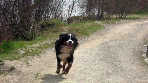 Im krone.at-Test: Die schönsten Hundezonen Wiens (Bild: Denise Zöhrer)