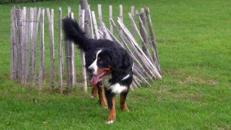 Der krone.at-Hundezonentest: Schweizergarten (Bild: Denise Zöhrer)