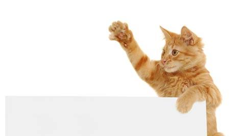Katzenpfoten als wissenschaftliche Fundgrube (Bild: Photos.com/Getty Images)
