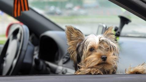 Wie du einen Hitzschlag vermeiden kannst (Bild: Photos.com/Getty Images)