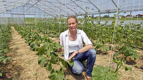 """Gemüseanbauer wollen jetzt """"Regionales stärken"""" (Bild: Markus Tschepp)"""
