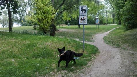 Der krone.at-Hundezonentest: Ziegelteich, Wien 22 (Bild: Martina Bergmann)