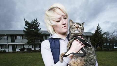 Wie du deine Katze bei Blitz und Donner beruhigen kannst (Bild: Photos.com/Getty Images)