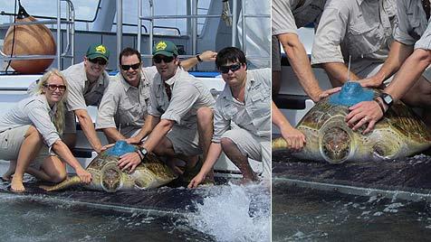 Schildkröte mit drei Flossen schwimmt vor Australien (Bild: AFP/Australia Zoo)