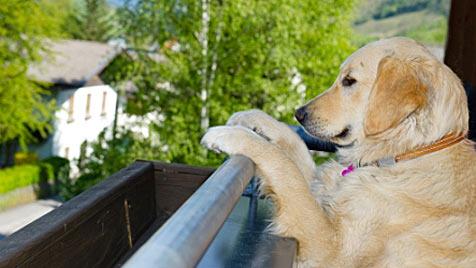 """Neues """"Hundehotel"""" in Salzburg ist in Europa einzigartig (Bild: hotel-grimming.com)"""