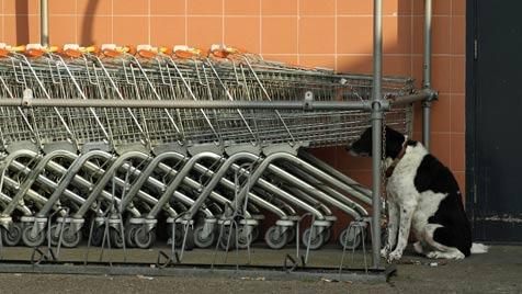 Gutes Hunde-Benehmen vor dem Supermarkt (Bild: Photos.com/Getty Images)