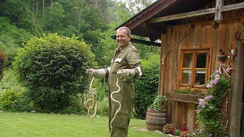 Oberösterreicherin ertappt liebestolle Nattern in Hütte (Bild: FF Scharnstein)