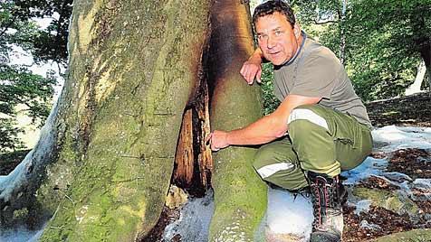 """Kuriose Suche nach dem """"Feuerbaum"""" im Bezirk Melk (Bild: Paul Plutsch)"""