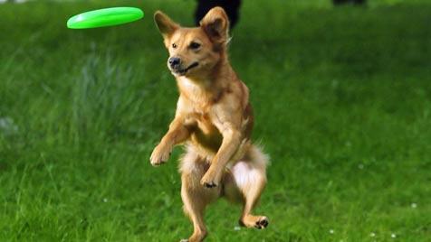 Welcher Sport passt zu Hund und Herrchen? (Bild: Agila Haustierversicherung)