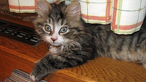Wie man verlassene Katzenkinder aufzieht (Bild: Evelyn Saftner)
