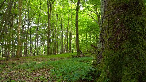 Wälder speichern deutlich mehr CO2 als angenommen (Bild: thinkstockphotos.de)