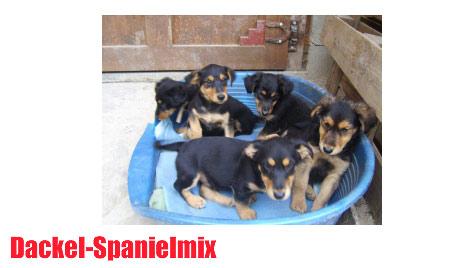 Hunde suchen ein neues Zuhause (Bild: Tierheim Klosterneuburg)