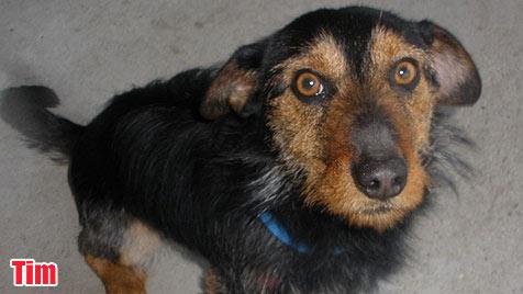 Hunde suchen ein neues Zuhause (Bild: Tierheim Sulzhof)