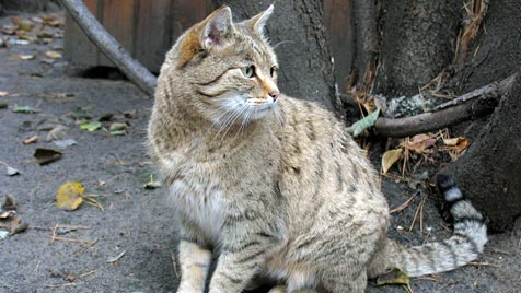 So klappt es mit der Katzenklappe (Bild: thinkstockphotos.de)