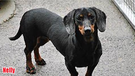 Hunde suchen ein neues Zuhause (Bild: Tierheim Dechanthof)