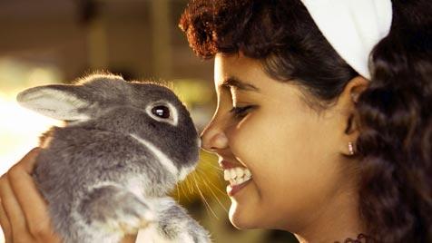 Frischluftoase für Kaninchen in Zimmerhaltung (Bild: thinkstockphotos.de)