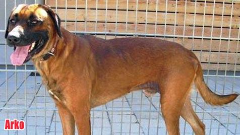 Hunde suchen ein neues Zuhause (Bild: Tierschutzverein Villach)