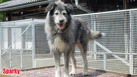Hunde suchen ein neues Zuhause (Bild: Landestierschutzverein Kärnten)