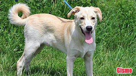 Hunde suchen ein Zuhause (Bild: Tierheim Dechanthof)
