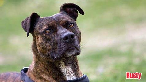 Hunde suchen ein Zuhause (Bild: Tierheim Vösendorf)