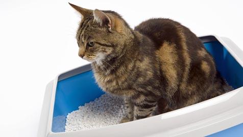Tipps gegen Geruch aus der Katzentoilette (Bild: thinkstockphotos.de)