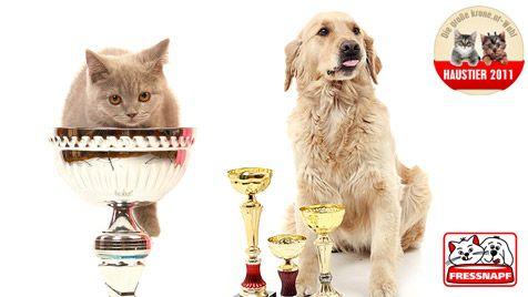 Die Sieger der Kategorien stehen fest (Bild: thinkstockphotos.de/Fressnapf/krone.at)