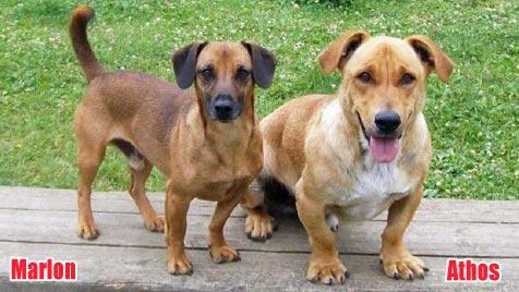 Hunde suchen ein Zuhause (Bild: Tierpension Schandl)