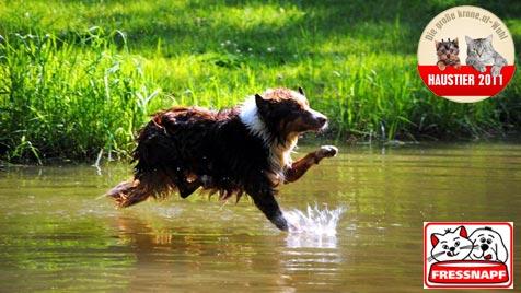 """""""Bounty"""" ist der aktivste und verspielteste Hund (Bild: Dominique Sommer)"""