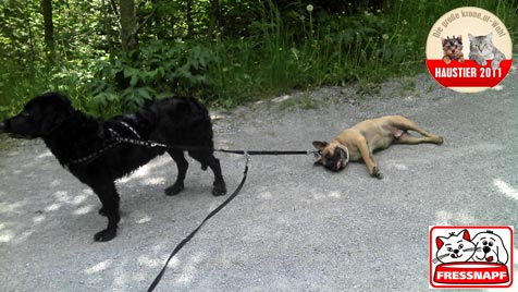 """""""Bruce"""" und """"Knox"""" sind die witzigsten Hunde (Bild: Mario Kappel)"""