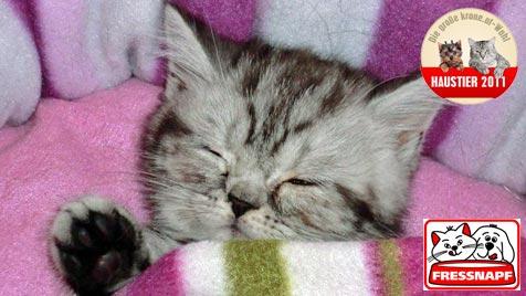 """Kimberly"" ist das süßeste Katzenbaby! (Bild: Christine Malzer)"