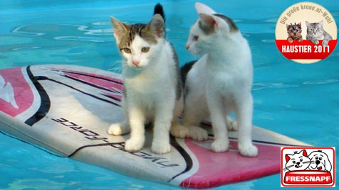 """""""Luke"""" und """"Larry"""" sind die aktivsten Katzen (Bild: Andrea Brunner)"""