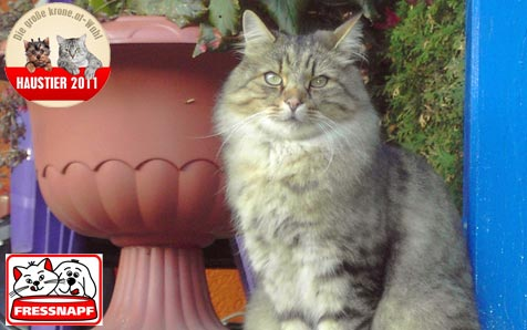 """""""Mucki"""" ist die schönste Katze (Bild: Kevin Mochar)"""