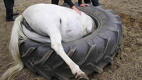 Feuerwehr befreit hungriges Pony aus Traktorreifen (Bild: dpa/Feuerwehr Hannover)