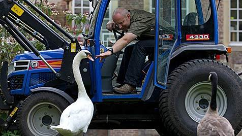 """Beziehungs-Aus zwischen """"Schwani"""" und dem Traktor (Bild: EPA, dpa/Friso Gentsch)"""
