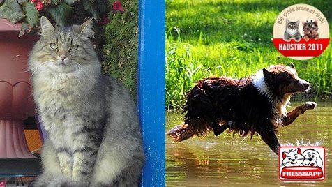 """""""Mucki"""" und """"Bounty"""" sind Katze und Hund 2011! (Bild: Sommer/Mochar/Fressnapf/krone.at)"""