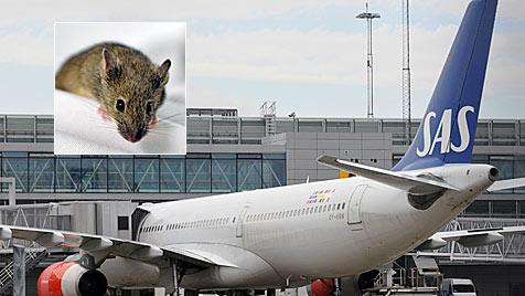 Schweden: Freche Maus verhindert Transatlantik-Flug (Bild: EPA)