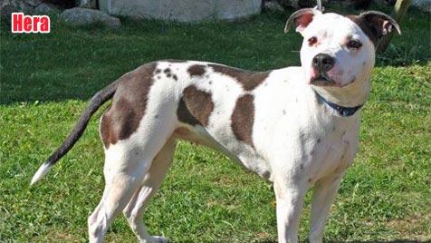 Hunde suchen ein Zuhause (Bild: Landestierschutzverein)